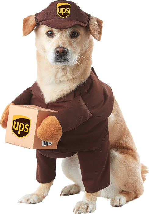 Chewy UPS Dog Costume