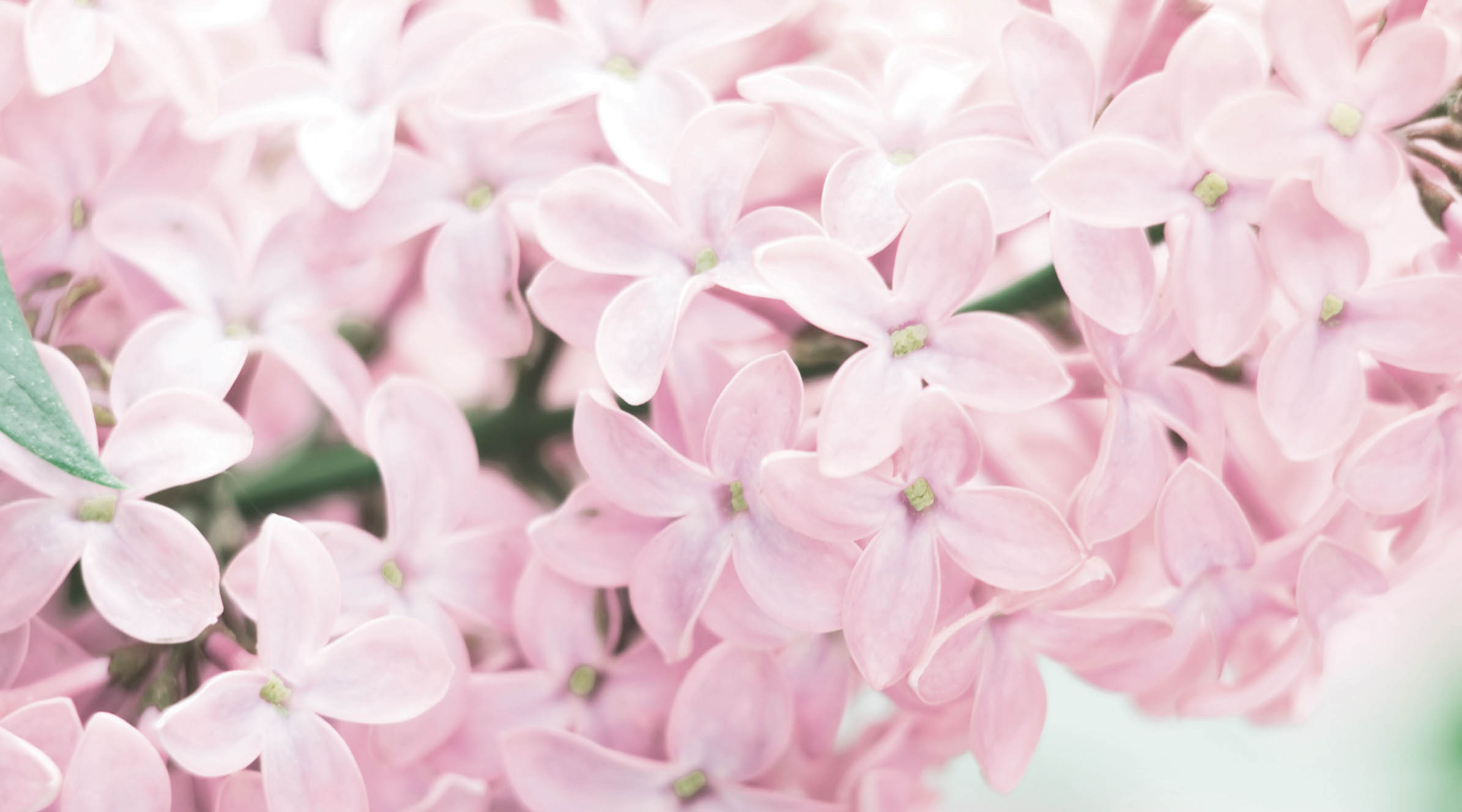 Spring-Lilac-2-720X400.jpg
