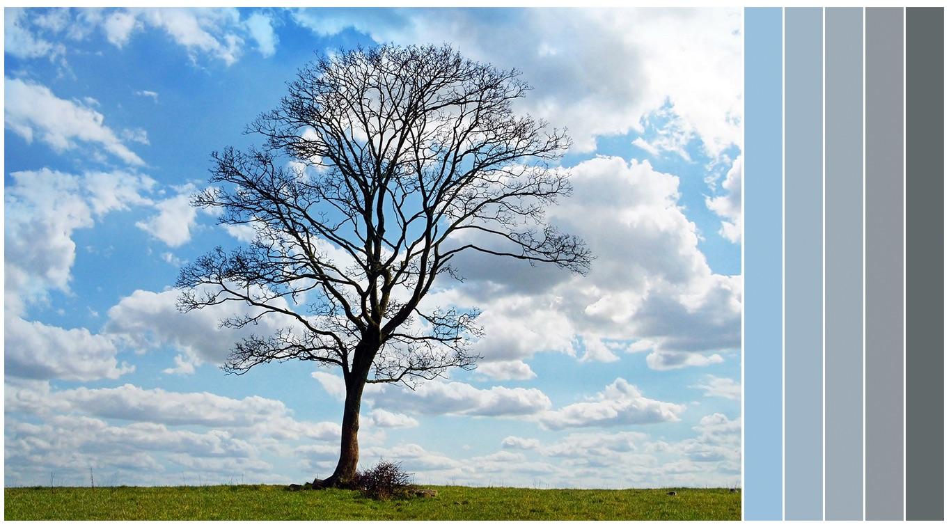 tree_palette.jpg