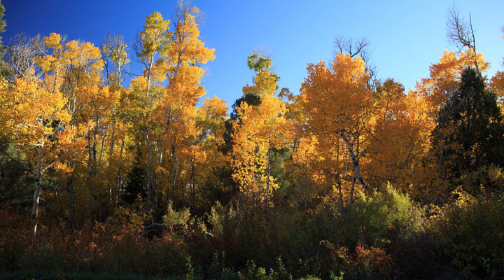 Fall_Colors_Nevada-720x400.jpg