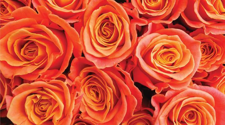 1910-Rose-Fusion-022020-4-720x400.jpg