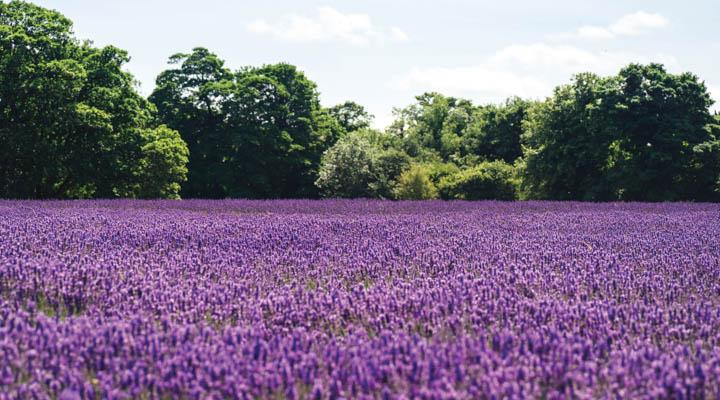 1910-Purple-Springs-052020-3-720x400.jpg
