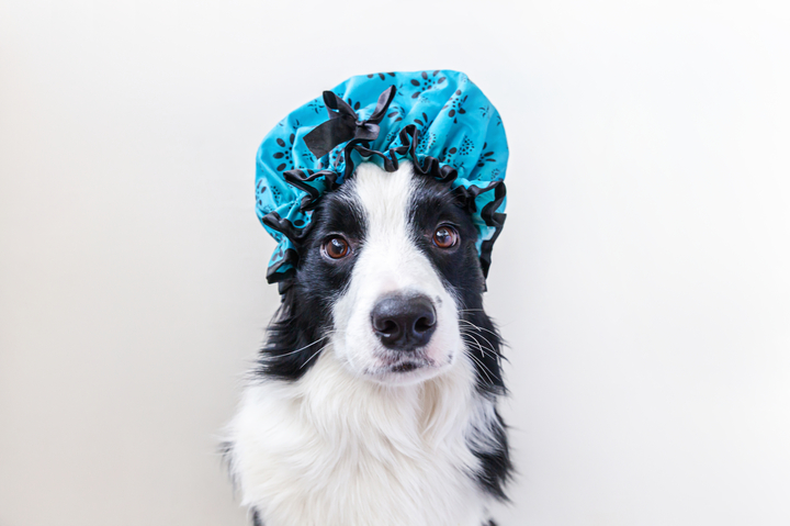 iStock-1267289820_dog_with_showercap.jpg