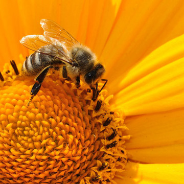 Regular bee 170551 1920
